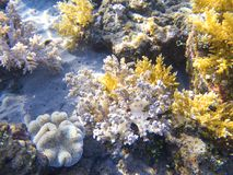 White and yellow sea plant. Exotic island shore shallow water. Tropical seashore landscape underwater photo. Coral reef animal. Sea nature. Undersea view of Stock Images