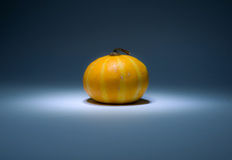 White and yellow striped pumpkin in the dark Royalty Free Stock Images