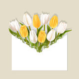 White and yellow tulips in the envelope. Realistic tulips with shadow on bright background. White and yellow flowers in openwork white envelope. Greeting card Royalty Free Stock Photos