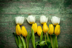 White and yellow  tulips over shabby wooden table Royalty Free Stock Photos