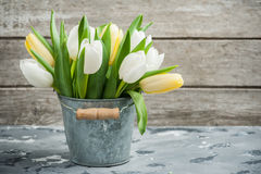 White and yellow tulips in tin bucket royalty free stock photography