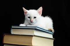 White Young Baby Cat Stock Photo