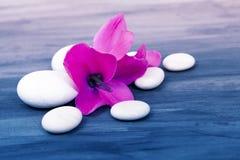 White zen stones on painted background Stock Photo