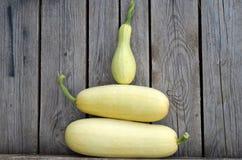 White zucchini! Royalty Free Stock Photos
