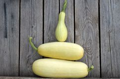 White zucchini!. Marrow, squash, gourds, vegetable, potherb, harvest, crop, fresh, kailyard, fertility, fecundity, prolific, fruitful, fertile, fecund, food Royalty Free Stock Photos