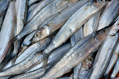 Whitebait fish. Raw whitebait fish selling in market, shown as fishing and agriculture concept Royalty Free Stock Image