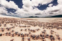 Whitehaven beach in Australia. Whitehaven Beach in the Whitsundays Archipelago, Queensland, Australia Royalty Free Stock Photo