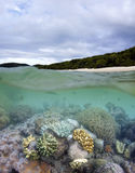 Whitehaven beach and living coral reef. A split under and over photograph of Whitehaven beach and living coral reef. Coral reefs surround most islands in the Stock Image