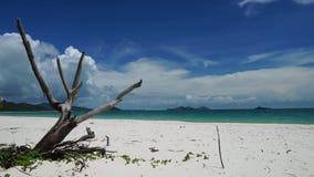 Whitehaven plaża Australia zbiory wideo