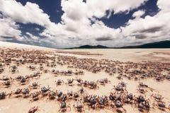 Whitehaven plaża w Australia Zdjęcie Royalty Free