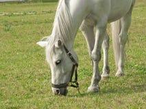 Whitehorse Stock Photos