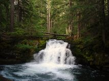 Free Whitehorse Falls Royalty Free Stock Photography - 3420707