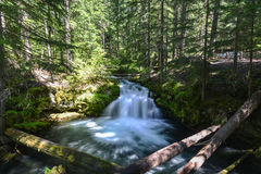 Whitehorse Falls, Oregon Stock Images