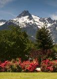 Whitehorse Mountain Rhododendrons Cascade Mountains Washington Royalty Free Stock Photos