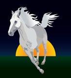 Whitehorse. White horse on a background sunset Stock Photography