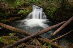 Whitehorsedalingen, het Nationale Bos van Umpqua royalty-vrije stock fotografie