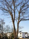 дерево и дома стоковая фотография