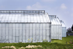 Whitened greenhouses Royalty Free Stock Images