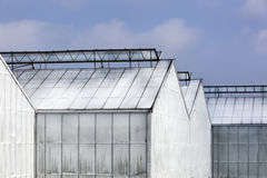 Whitened greenhouses Stock Photo