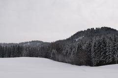Whiteout στα δέντρα Στοκ Εικόνες