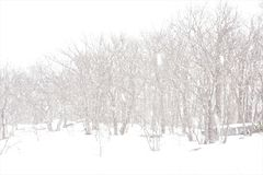 Whiteout conditions in Catskill snowstorm. The forest edge along a snow covered meadow is deluged with large frozen flakes of snow. Visibility near zero, the royalty free stock photos