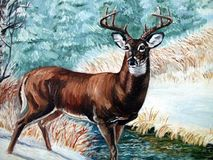 Whitetail- Buck. A painting of a Whitetail buck in snow That i painted stock illustration