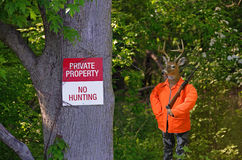 Whitetail buck hunter in woods. Big buck dressed as a deer hunter in woods with no hunting sign posted on a tree Royalty Free Stock Photos
