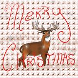 Whitetail Christmas 2. Whitetail buck with a Merry Christmas greeting Stock Photography
