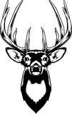 Whitetail Deer Head. Vector Illustration of a Whitetail Deer Head Royalty Free Stock Photography