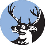 Whitetailherten Buck Head Circle Retro Royalty-vrije Stock Afbeeldingen