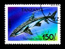 Whitetip Refuje rekinu, seria, około 1993 (Triaenodon obesus) Fotografia Stock