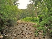 Whitetop在严厉天旱期间的月桂树小河 免版税库存图片