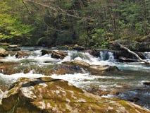 Whitetop在弗吉尼亚爬行物足迹的月桂树小河 库存照片