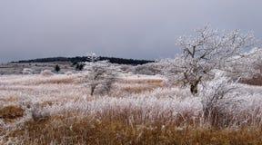Whitetop berg Royaltyfria Bilder