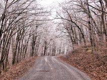 Whitetop góra Zdjęcie Royalty Free