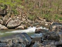 Whitetop Laurel Creek op Virginia Creeper Trail Stock Foto