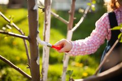 Whitewash of the tree trunk, little girl working in the garden stock image