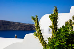 Whitewashed roofs in Santorini, Greece. Santorini island, Greece - White roofs and succulent plants Royalty Free Stock Photos