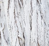 Whitewashed tree bark natural texture or background. Closeup stock images