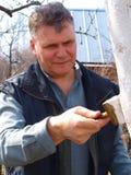 Whitewashing of trees. The man in the garden of fruit trees whitewash stain Stock Image