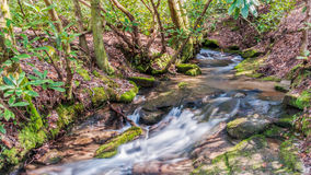 Whitewater creek in forest Stock Photography