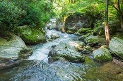 Whitewater in het Nationale Bos van Chattahoochee stock afbeeldingen