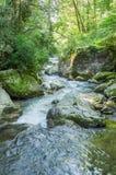 Whitewater in het Nationale Bos van Chattahoochee stock foto