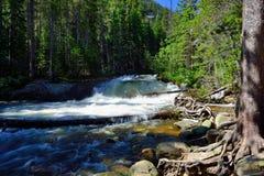 Whitewater in montagne rocciose parco nazionale, Colorado immagine stock libera da diritti