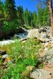 Whitewater in montagne rocciose parco nazionale, Colorado immagine stock