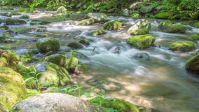 Whitewater stream. Royalty Free Stock Images