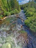 Whitewaterkreek in de zomer, Rocky Mountains, Colorado royalty-vrije stock fotografie