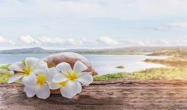 WhitFocused στο άσπρη κίτρινη plumeria λουλουδιών ή τη δέσμη frangipani Στοκ Εικόνα
