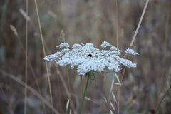 Whitish flowers Stock Photos