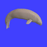 Whitle beluga whale calf Royalty Free Stock Images